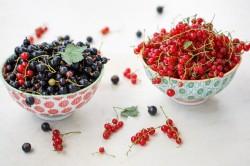 Польза красной и черной смородины при лечении ишемического инсульта