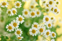 Лекарственные травы при инсульте