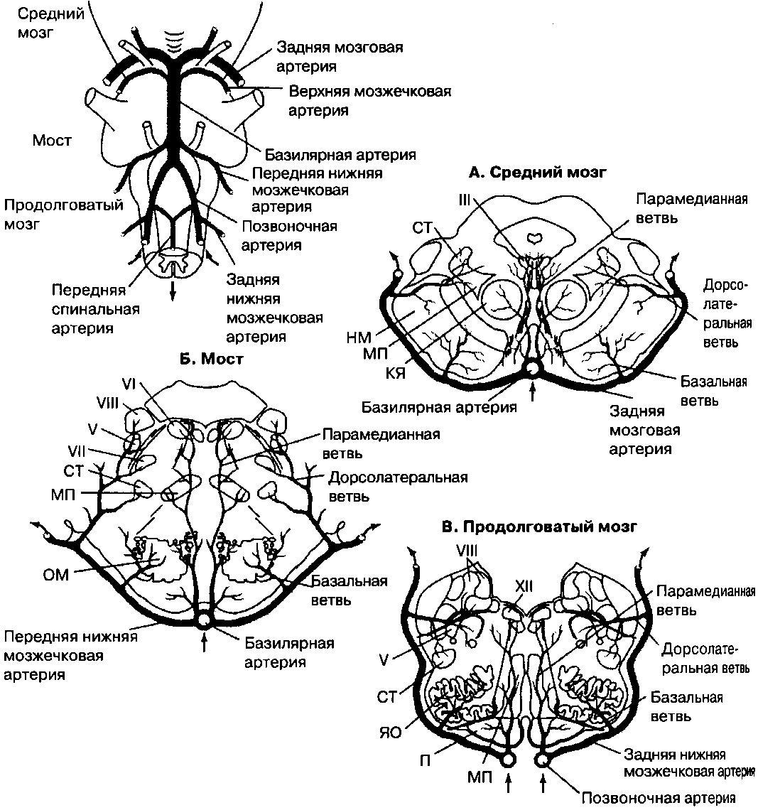Спинальный инсульт: симптомы, лечение и последствия