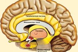 Строение мозгай