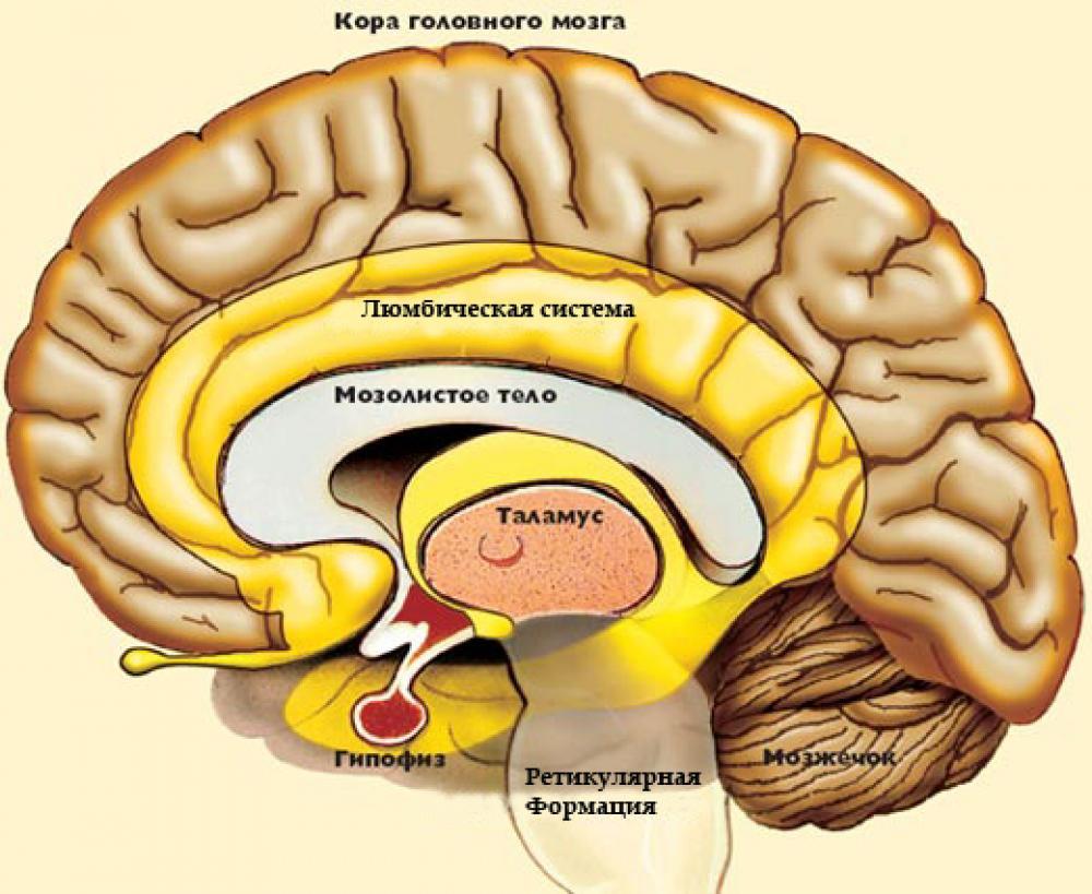 Лакунарный инфаркт головного мозга: симптомы, лечение и последствия