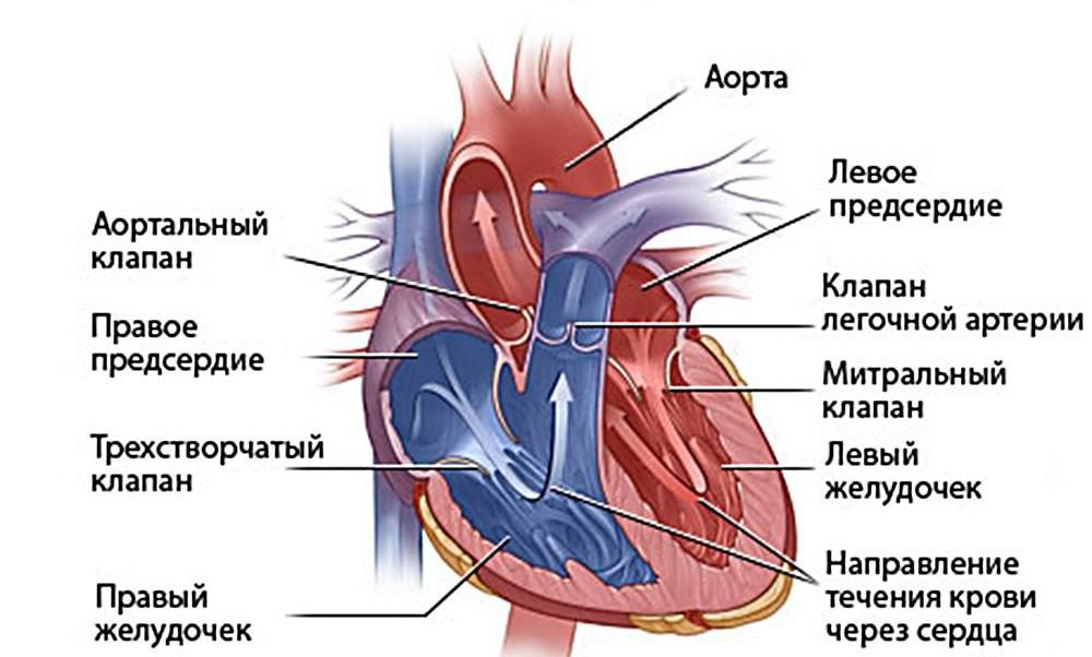 Первая помощь при аритмии сердца