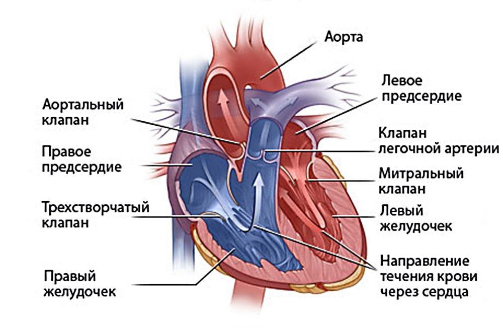 Порок сердца у детей: причины и признаки