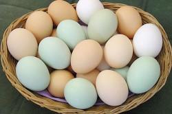 Яйца при васкулите
